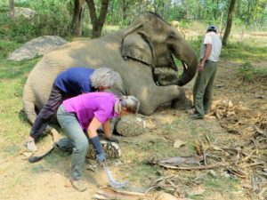 Elephant foot care in Nepal.